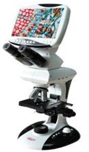 KOZO-ms-LCD-800